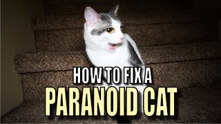 Talking Kitty Cat 56  How To Fix A Paranoid Cat