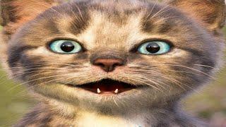 Little Kitten & Friends Learn with the cutest cat