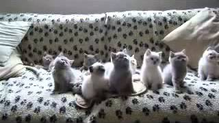 видео смешные котята