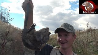 FIRST EVER Footage of 2 Mink Tag-teaming a Muskrat!!!