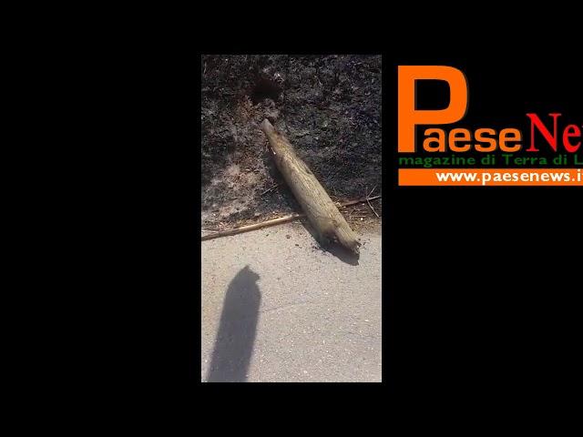 pietravairano palo bruciato