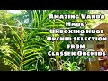 Seller review 2 : Unboxing a Massive Orchid Haul from Claessen Orchids!