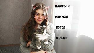Плюсы и Минусы котов в доме😺