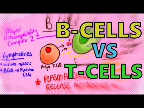 B Cells vs T Cells | B Lymphocytes vs T Lymphocytes - Adaptive Immunity - Mechanism