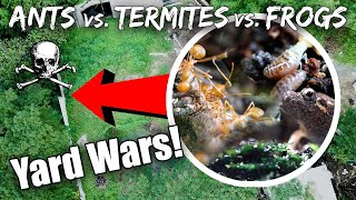 There's a Huge War in my Backyard: Ants vs Termites vs Frogs