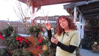 Great Christmas finds at Cindy's Thumbnail