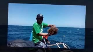Model Budidaya Rumput Laut 2016