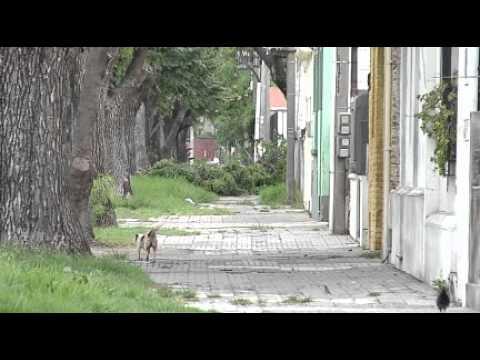 Vecinos de señora atacada por pit bull quieren evitar que esos perros estén en la zona