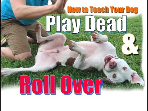 How to Teach Your Dog to  Roll Over and 'Play Dead' FAST!