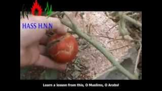 NEW Islamic Miracle in Syria *VIDEO* Allah Al Nasir!