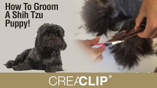 How To Groom A Shih Tzu Puppy!