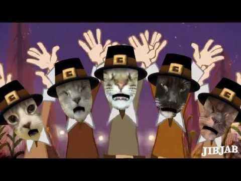 A Very Happy Thanksgiving From Blind Cat Rescue Youtube