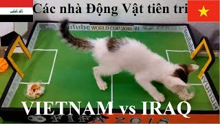 Animal prophets Prove the results of Vietnam and IRAQ - Asiancup 2019!