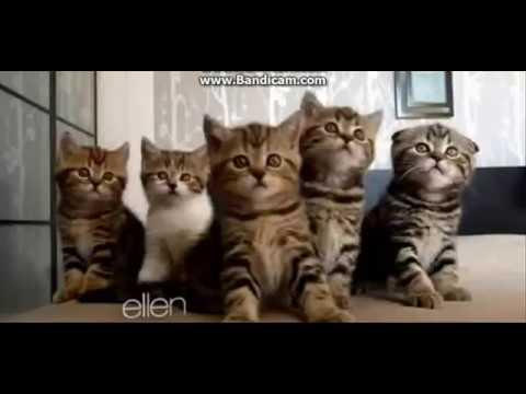 Ellen S Best Funniest Cat Moments Youtube