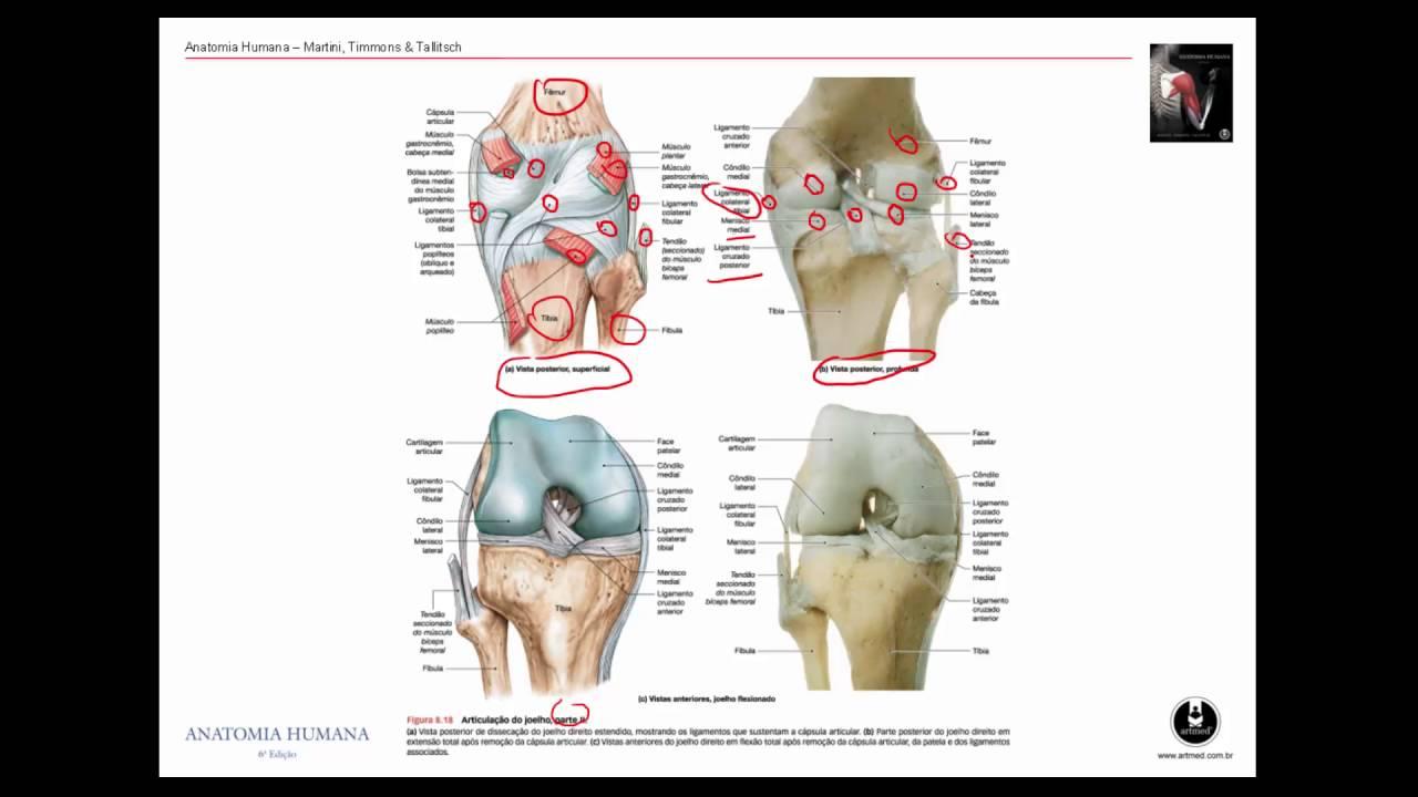Famoso Descarga Grises Anatomía Ornamento - Imágenes de Anatomía ...