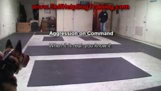 German Shepherd Attack Training (k9-1.com)