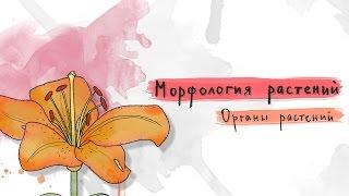 Органы растений. Морфология растений - 1