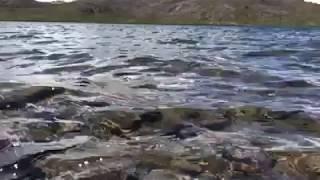 Deosai, Gilgit Baltistan 😍