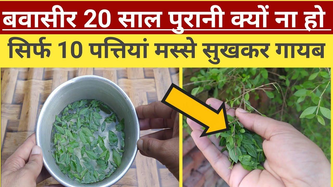 सिर्फ 10 पत्ती 20 साल पुरानी बवासीर से 3 दिन में छुट्टी शाम सोते समय मात्र एक बार//Bawaseer Ka ilaj