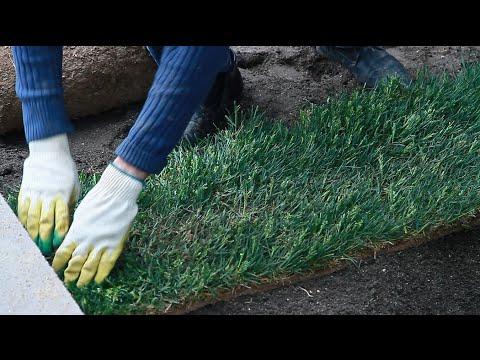 Газон. Рулонный газон.Укладка газона. . как уложить газон. готовый газон.зеленый газон