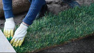 Газон. Рулонный газон.Укладка газона. . как уложить газон. готовый газон.зеленый газон(, 2015-01-22T11:46:11.000Z)