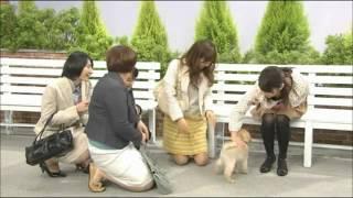 「志村劇場」 亜里沙出演部分 http://ameblo.jp/alialichan0302/