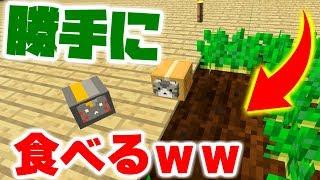 【マインクラフト】家具MODを追加してデブ猫と生活したい #12 畑の作物を食ってしまうデブ猫【マイクラ実況】