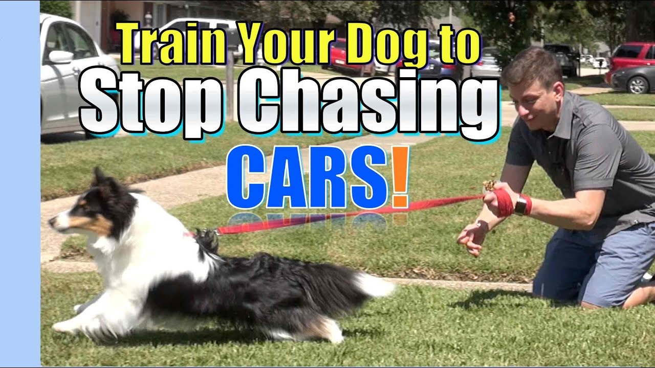 how do i stop my dog barking in the car