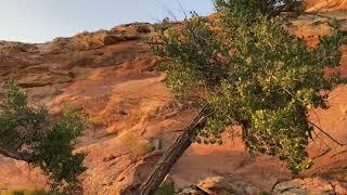 🔴 ГОТОВА переночевать 🔴 ночь в лесу в горах Юты АВТО ПУТЕШЕСТВИЕ по штатам США 23.09.2020