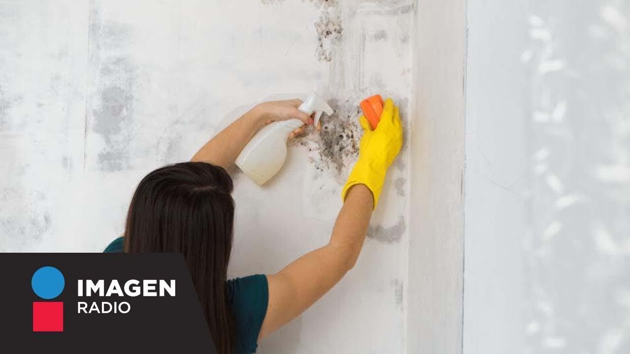 Cómo eliminar el moho en casa / Bien y Saludable - YouTube