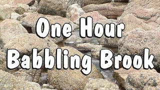 Babbling Brook Nature Sounds and Relaxing Video One Hour