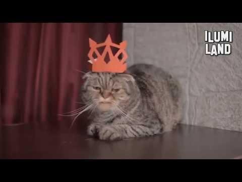 Скачать видео привет я кот