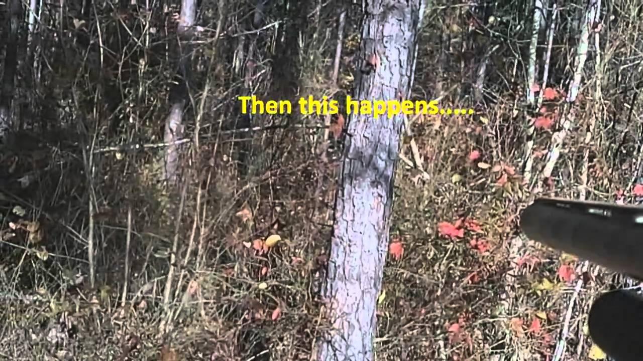 Best Dogs Hunting Deer