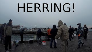 Finding, Catching, Leaving - CHASING HERRING - Fishing, Friends & Fighting