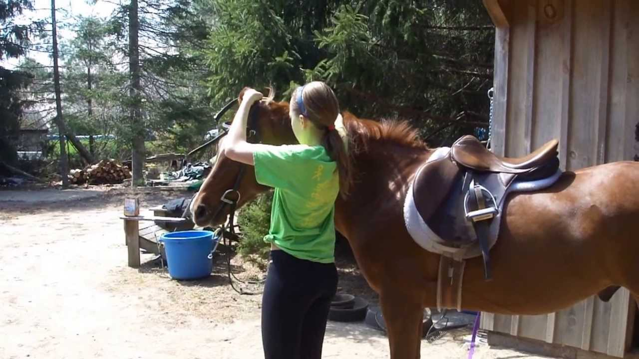 I want to ride a horse I dream from childhood and where you can find out where there are such services ready to go to any city 32