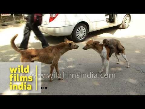 Strangest friendship EVER! Dog carries monkey friend around for life!