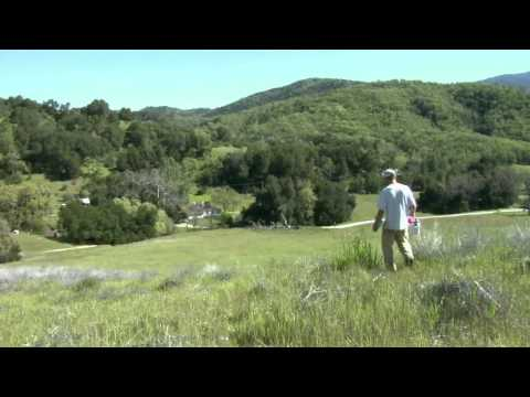 Ecology of Valley Oaks in California