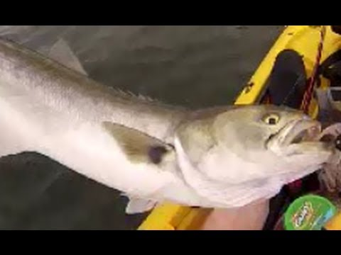 Smelly fish slick action youtube for Does fish oil make you smell