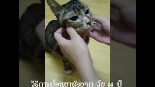 วิธีป้อนยาแมว (จุกวัย 14 ปี)