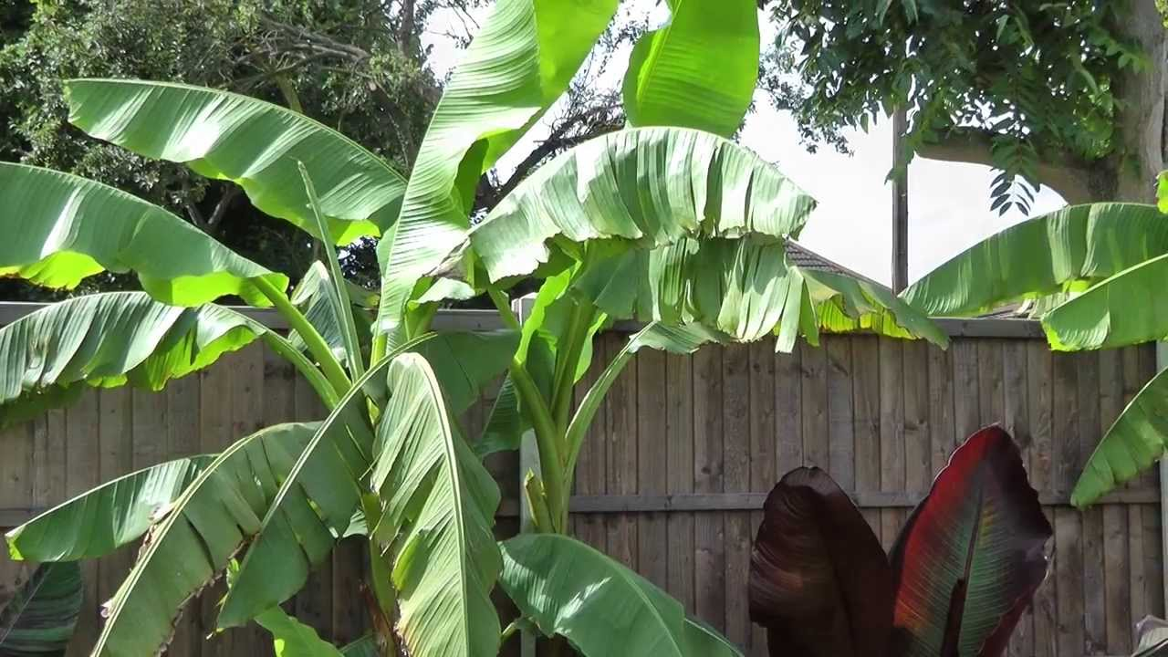 Tropical Garden Ideas Uk uk tropical garden 2012 - youtube