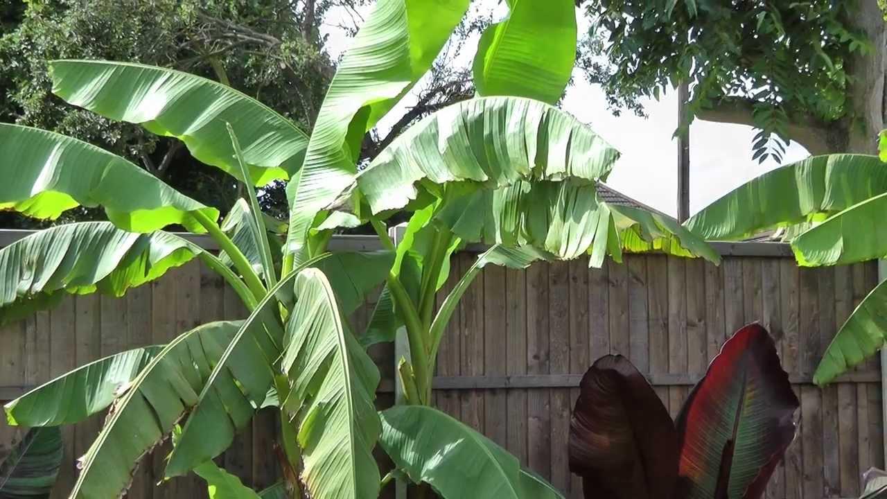 UK Tropical Garden 2012 YouTube