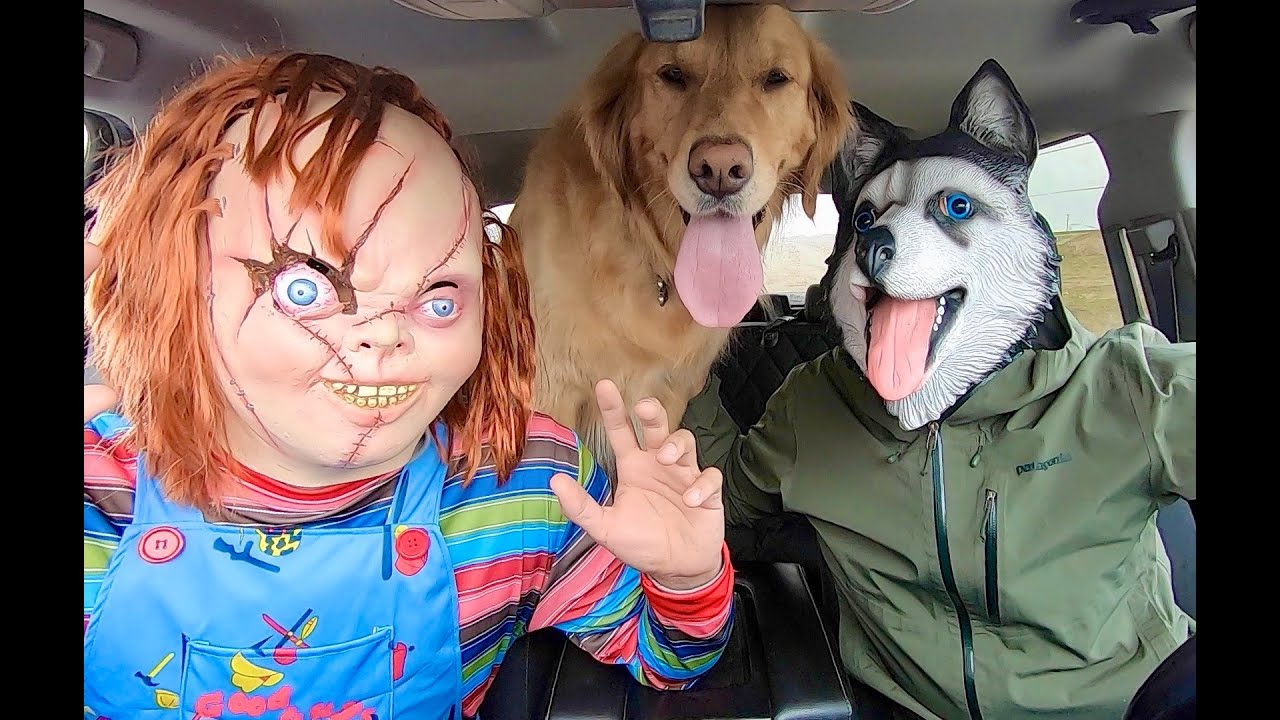 Chucky Surprises Puppy & Husky With Dancing Car Ride!