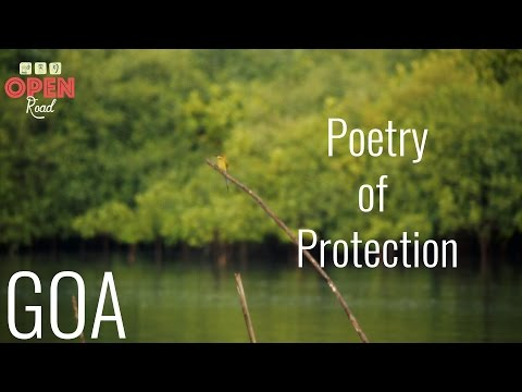 Open Road India - 13 - MANGROVES Poetry of Protection (Goa)
