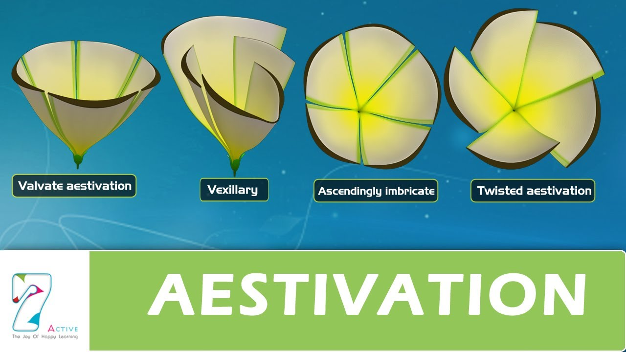Aestivation youtube ccuart Choice Image