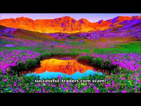 successful traders scam