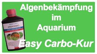 Algenbekämpfung im Aquarium -  Easy Carbo-Kur