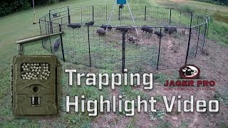 Wild Hog Trapping | Hog Trapping Video Highlight |  JAGER PRO™
