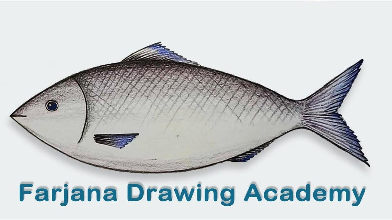 how to draw a fish step by step very easy  [ 1280 x 720 Pixel ]