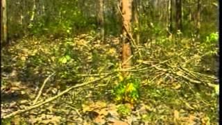 Kompor Tenaga Surya P. Minto (ALM)