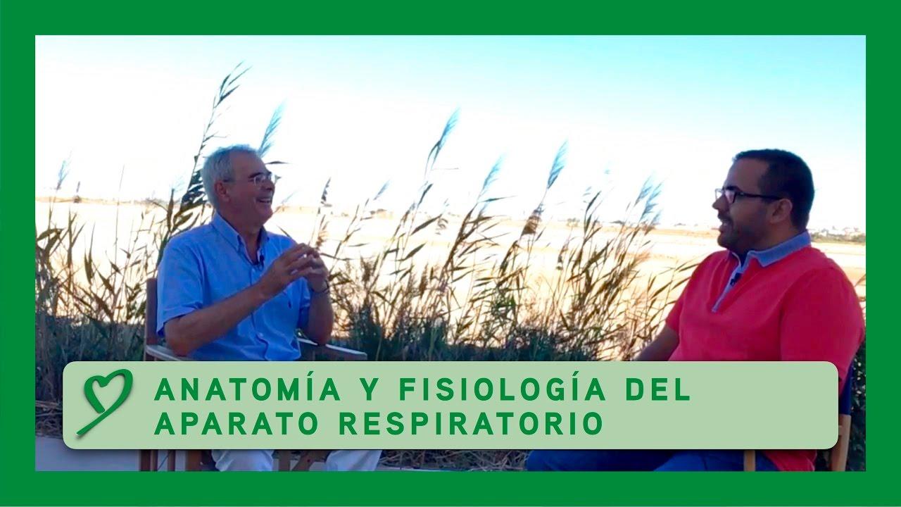 Anatomía y fisiología del APARATO RESPIRATORIO - YouTube